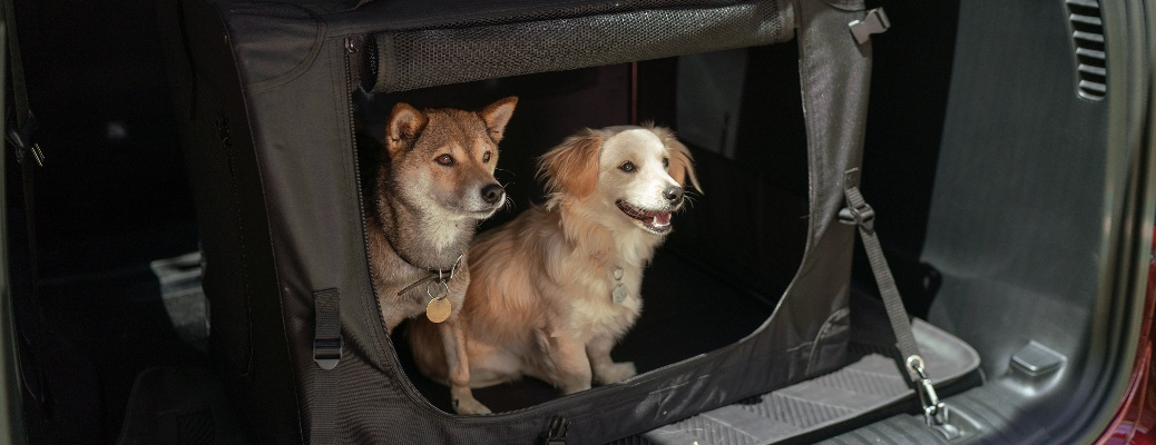 Two dogs in a Mopar kennel in the back of a Chrysler Pacifica