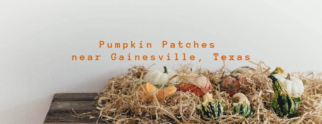 Pumpkin Patches near Gainesville Texas with little gourds on the table