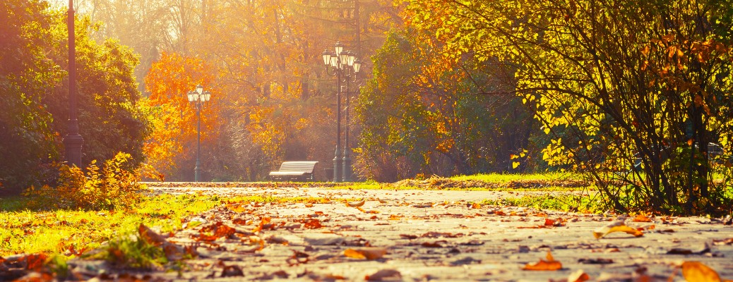 early autumn sunset path lights bench and leaves