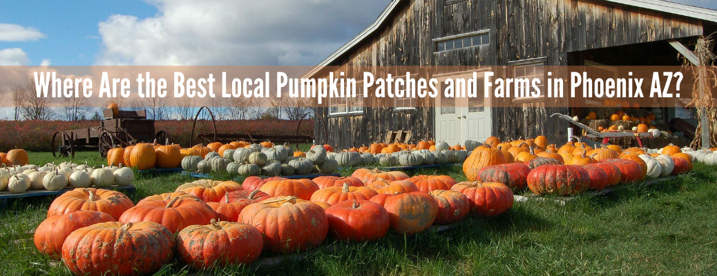 Where To Find Pumpkin Patches Around Avondale and Phoenix 2020