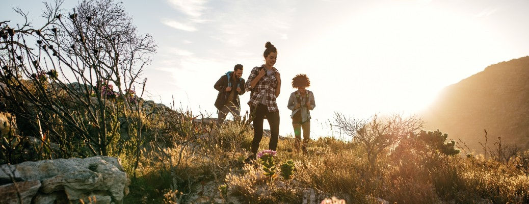 Three people hiking on a hill with plant life around them.