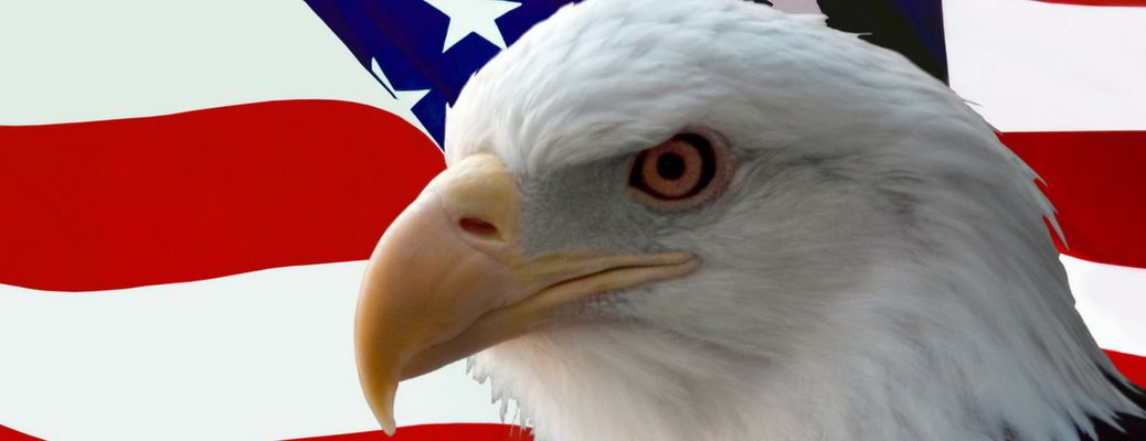 Bald eagle face in front of American flag backdrop