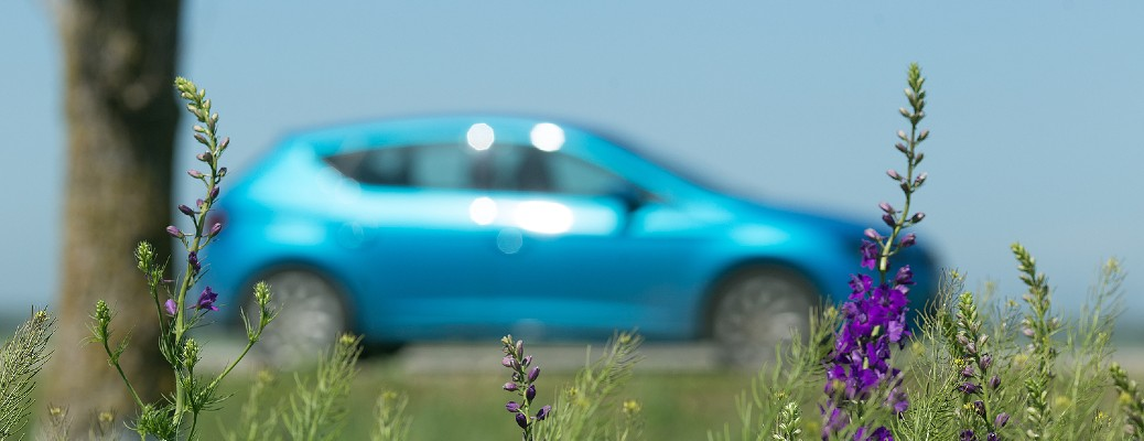 blue vehicle by flowers