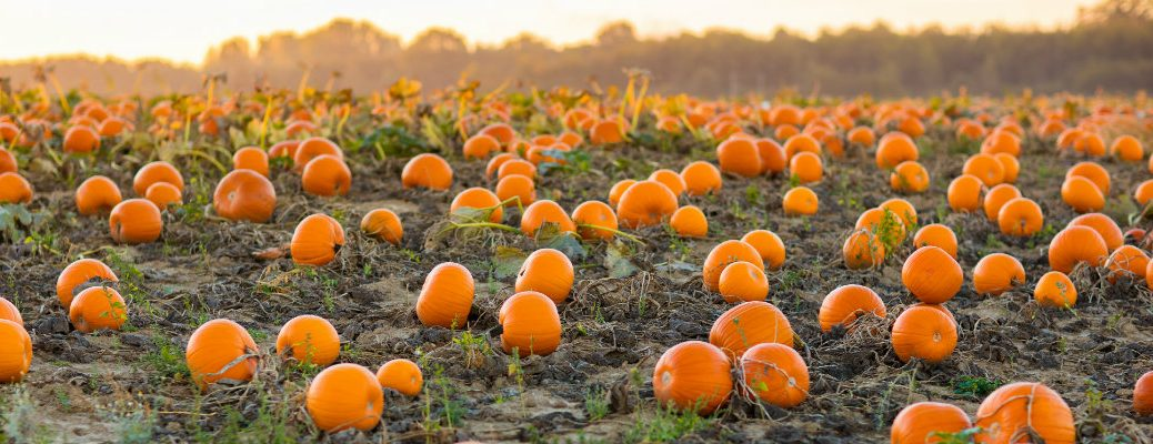 Pumpkin patches and fun fall activities in Shasta County CA