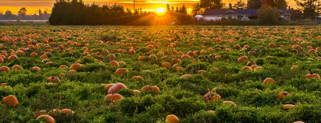 Pumpkin Patches Near Redding, CA