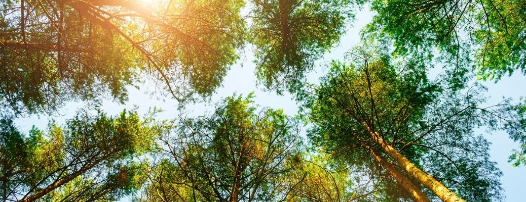 View of multiple trees in park and sunlight beaming on them