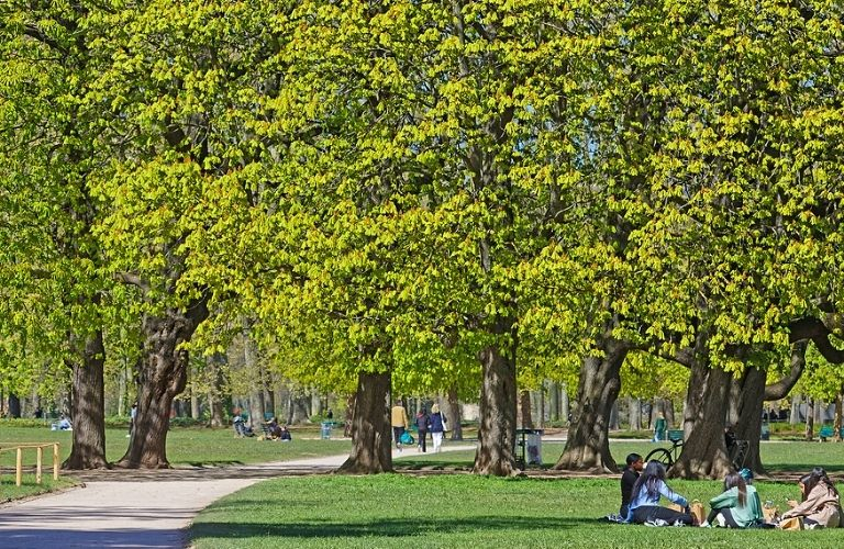 Image of a lush green park