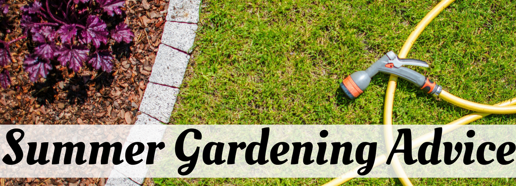 Summer Gardening Advice on a backyard and hose background