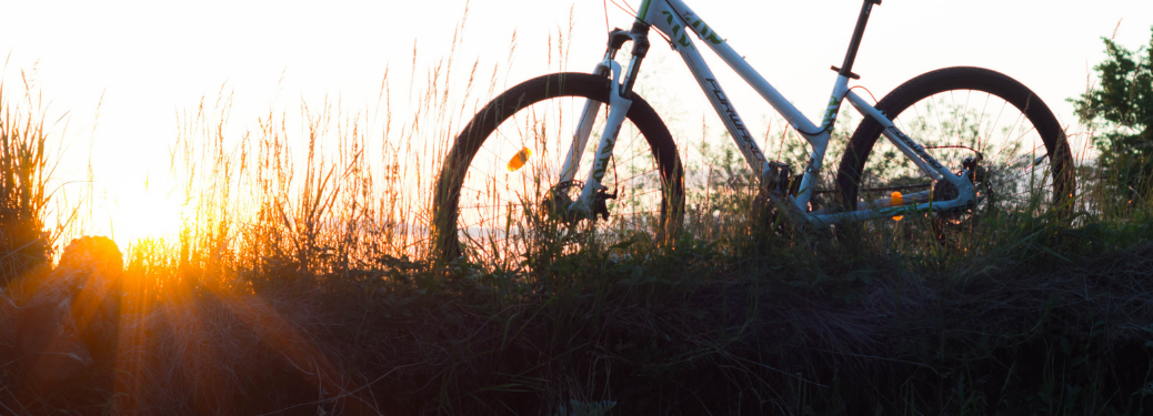 A bike parked in tall grass at sunset