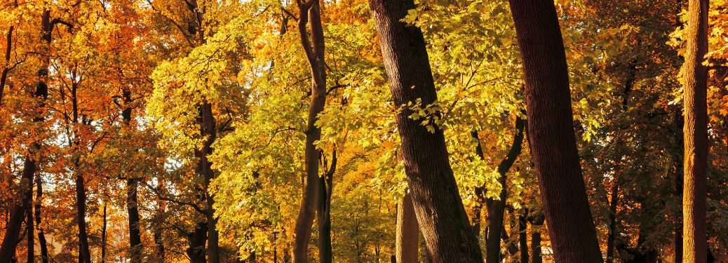 trees with orange and yellow leaves