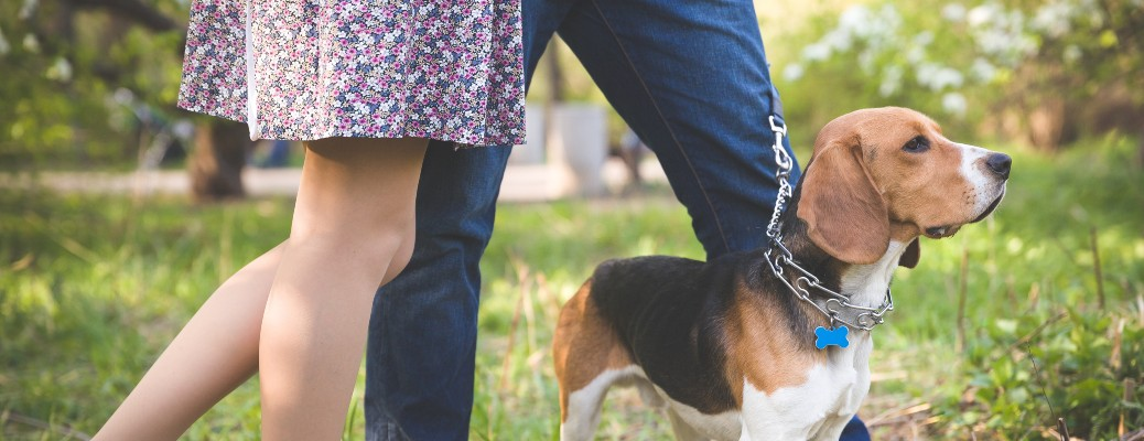 A young couple with a beagle walking into a forested area in a dog park.
