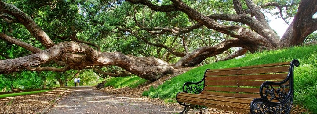 View of a park with a chair and an old tree