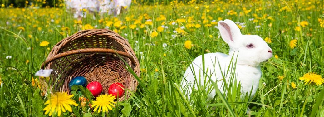 A white rabbit sitting to the right of an Easter basket in the grass.