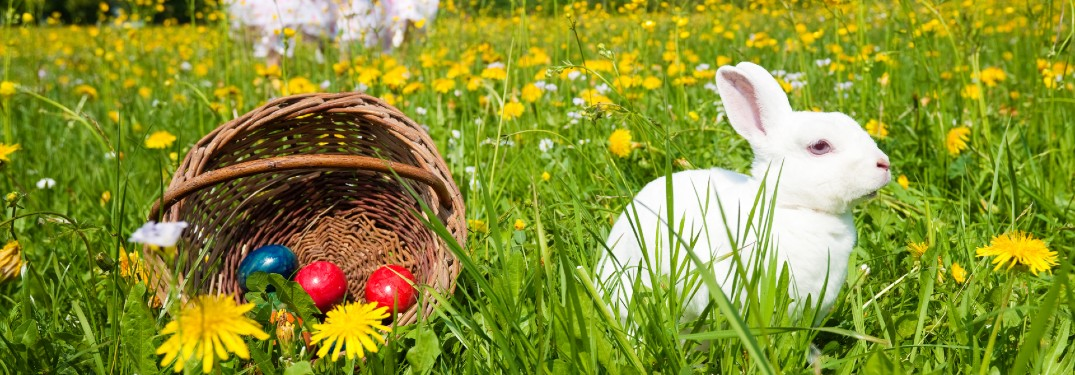 Local Businesses near Thousand Oaks, CA that Can Help Fill Easter Baskets