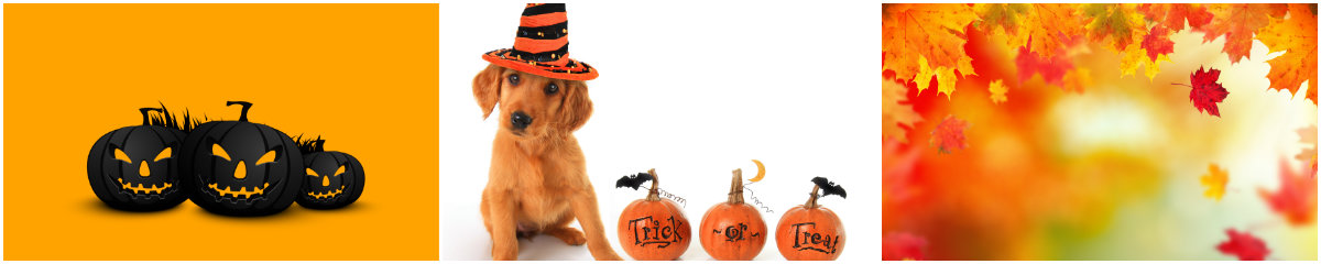 collage-of-halloween-images-with-carved-pumpkins-dog-in-halloween-hat-and-changing-leaves