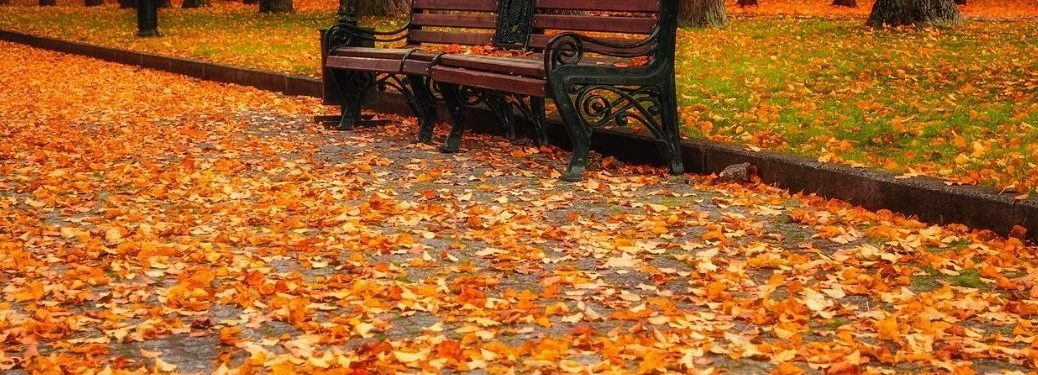 Fall outside with leaves all on the ground