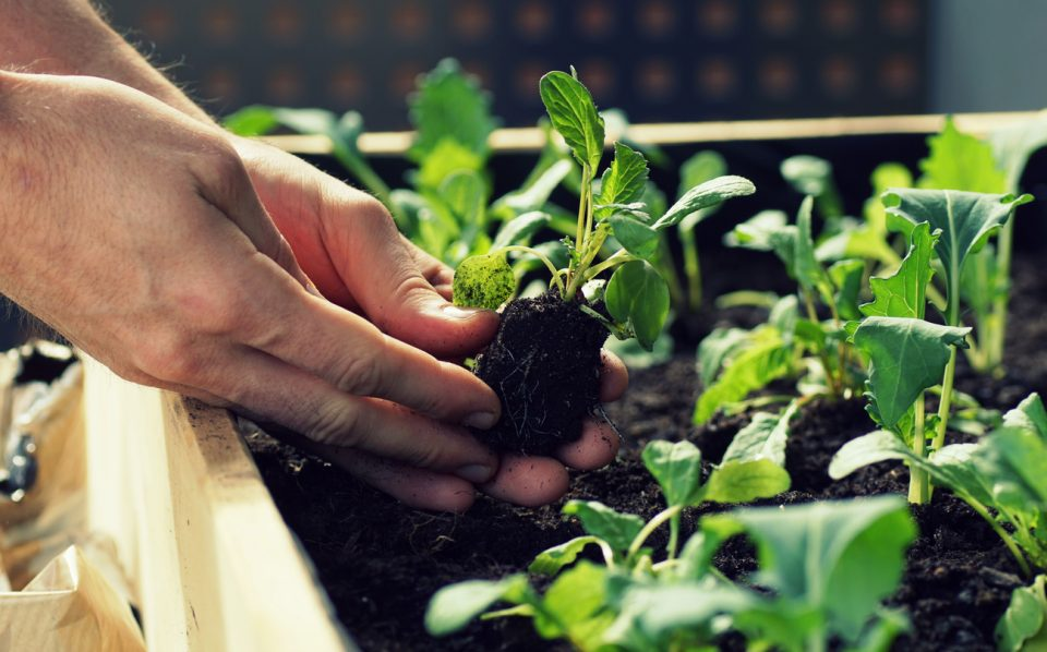 Ventura, CA Gardeners Can Plant These Crops This August