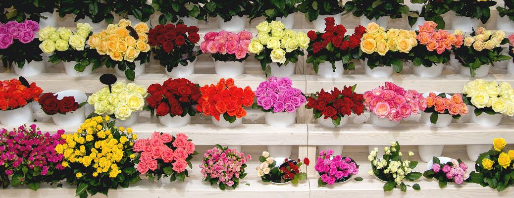 rows of colorful flower assortments, bouquets, and vases set up inside a florist shop for a Valentine's Day display