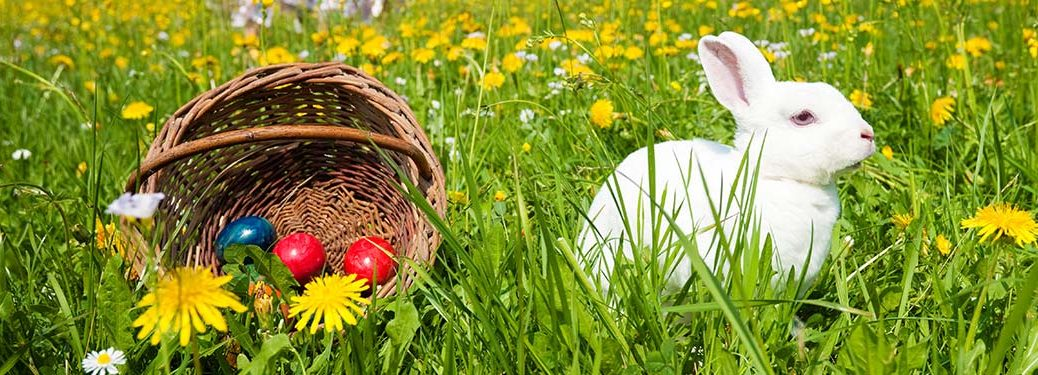 Image of a white bunny sitting next to a basket with Easter Eggs in a grassy field