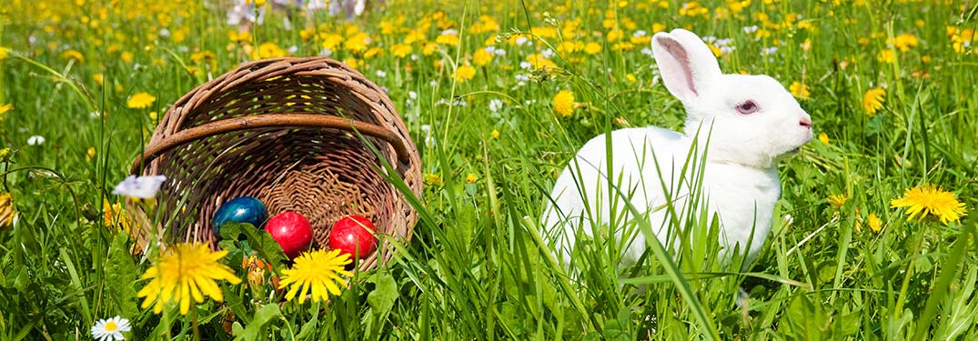 Where Can You Celebrate Easter 2019 Near Farmington?