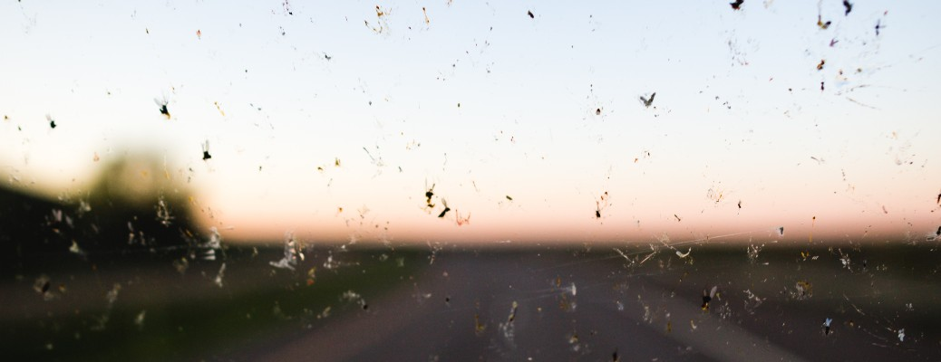 stock photo of dead bugs on windshield