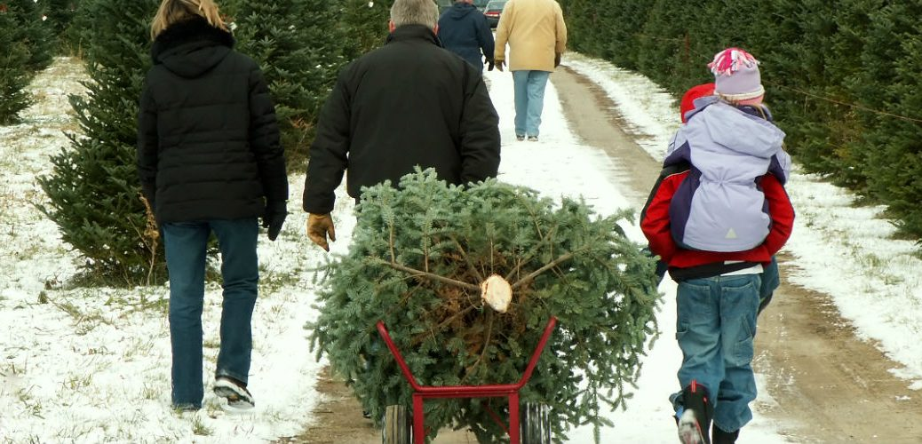 Where Can I Find Christmas Trees Near Lima, OH?