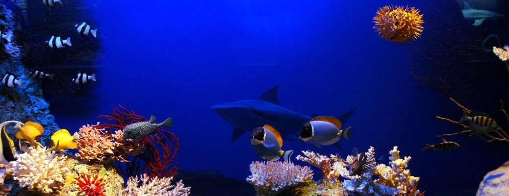 Aquarium with a shark, a pufferfish, and other fish species