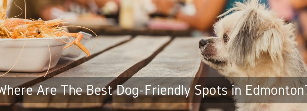 dog-friendly cafes patios markets edmonton ab shorewood ford