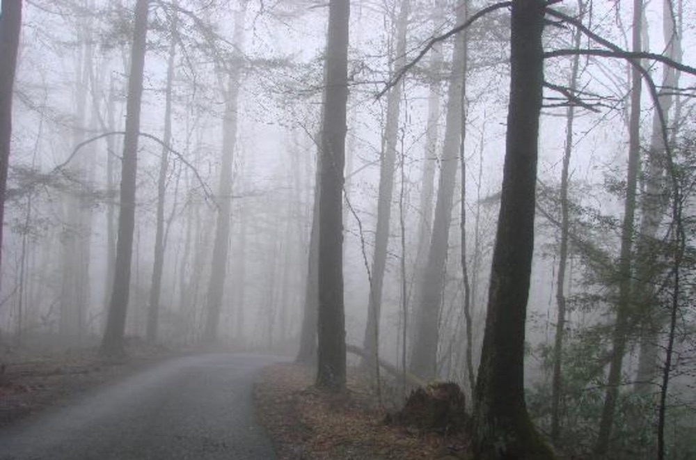 Roaring Fork Motor Trail - TN Haunted Roads and Places