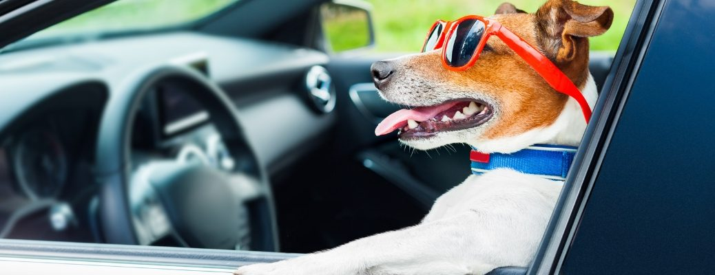 Dog wearing sunglasses in car