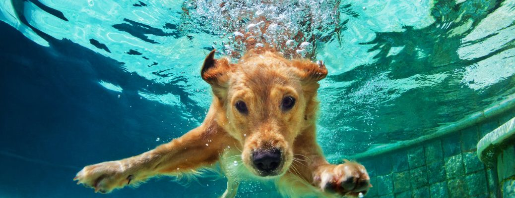 Dog diving into the water and having fun