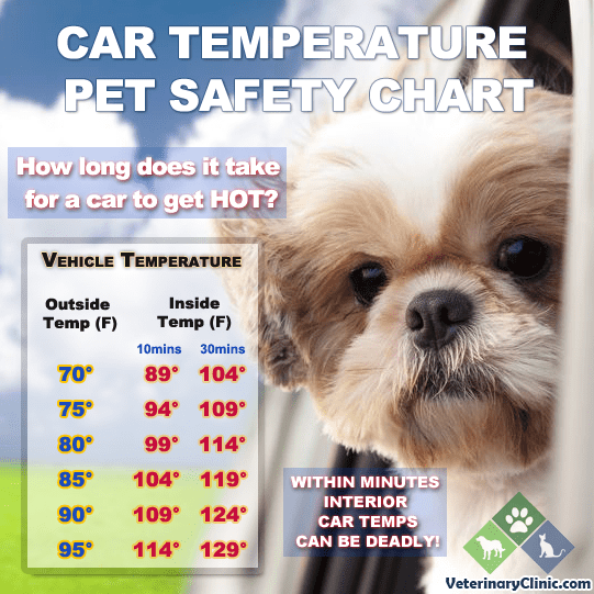 pet safety in your vehicle when temperatures rise summer