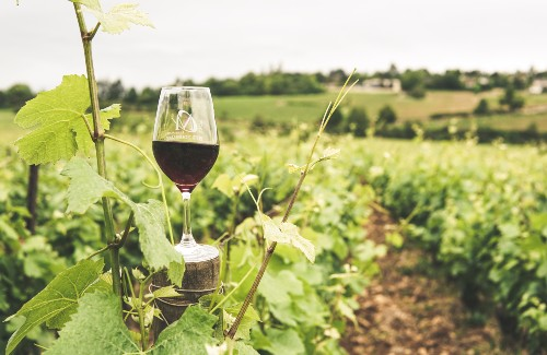 glass of red wine on top of wooden post in vineyard