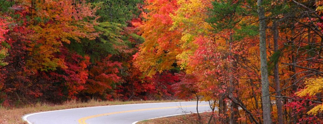 Colored leaves on trees surrounding back road