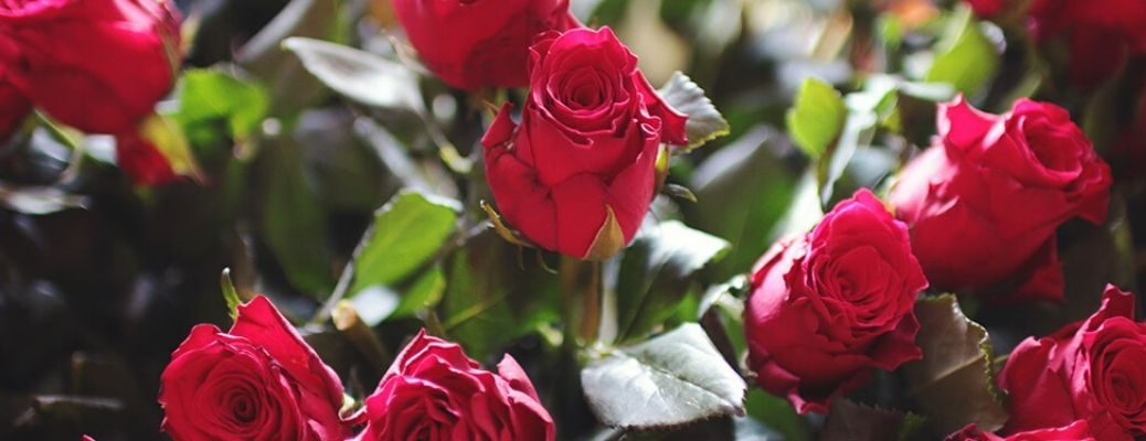 Closeup image of a bouquet of Roses for Valentine's Day