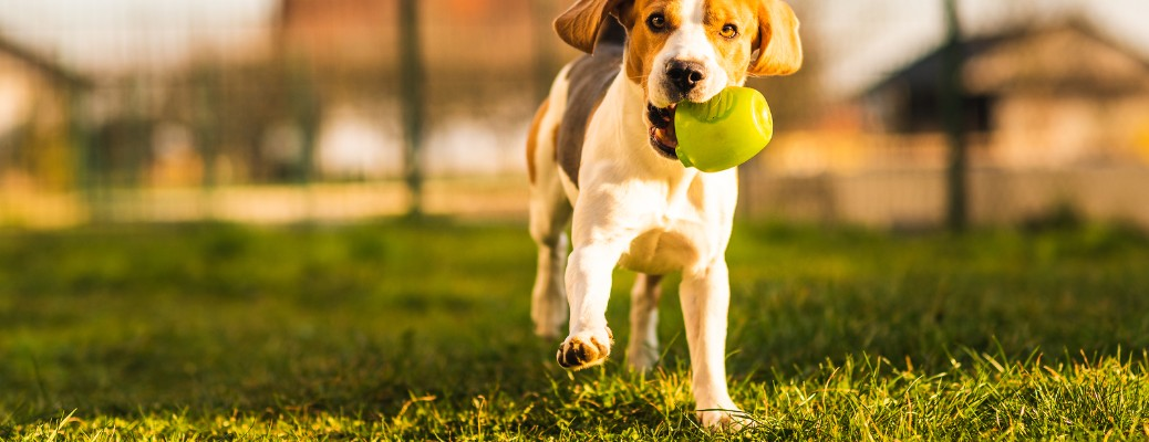 Best Off-Leash Dog Parks Located in Janesville WI