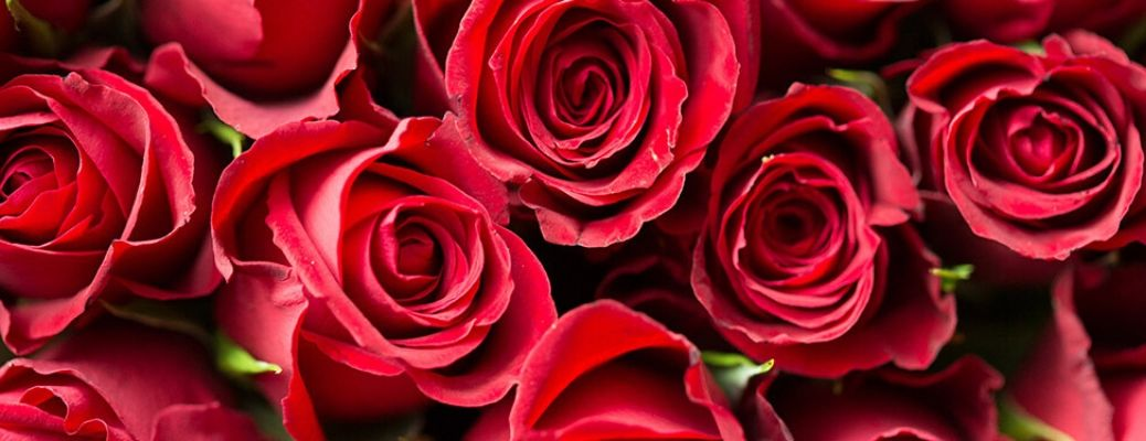 What Flower Shops in the Janesville Area Offer the Best Valentine's Day 2020 Gift Options?