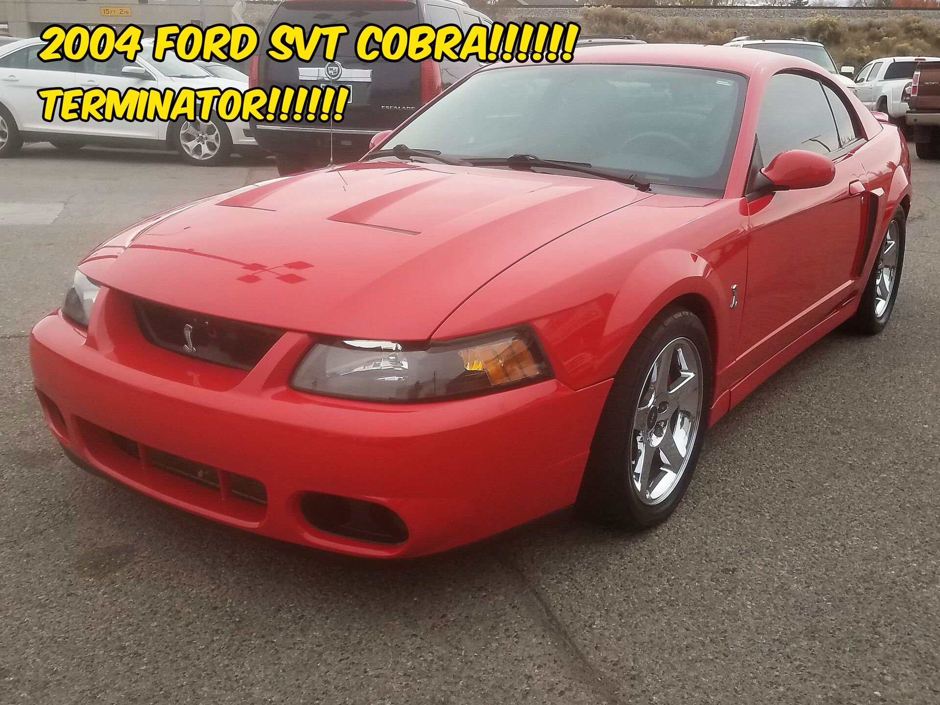 2004 Ford SVT Cobra