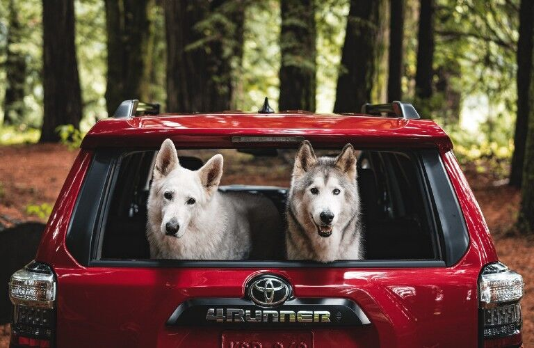 two dogs in the 2021 Toyota 4Runner