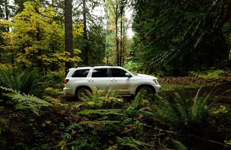 2020 Toyota Sequoia from side in woods