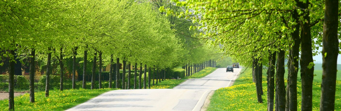 Tree-lined road during the spring season