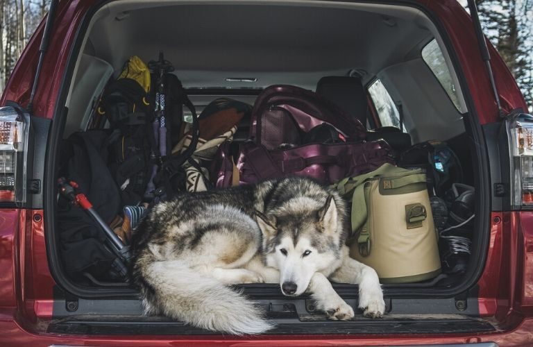 Interior view of a full cargo area with a resting dog inside a 2020 Toyota 4Runner