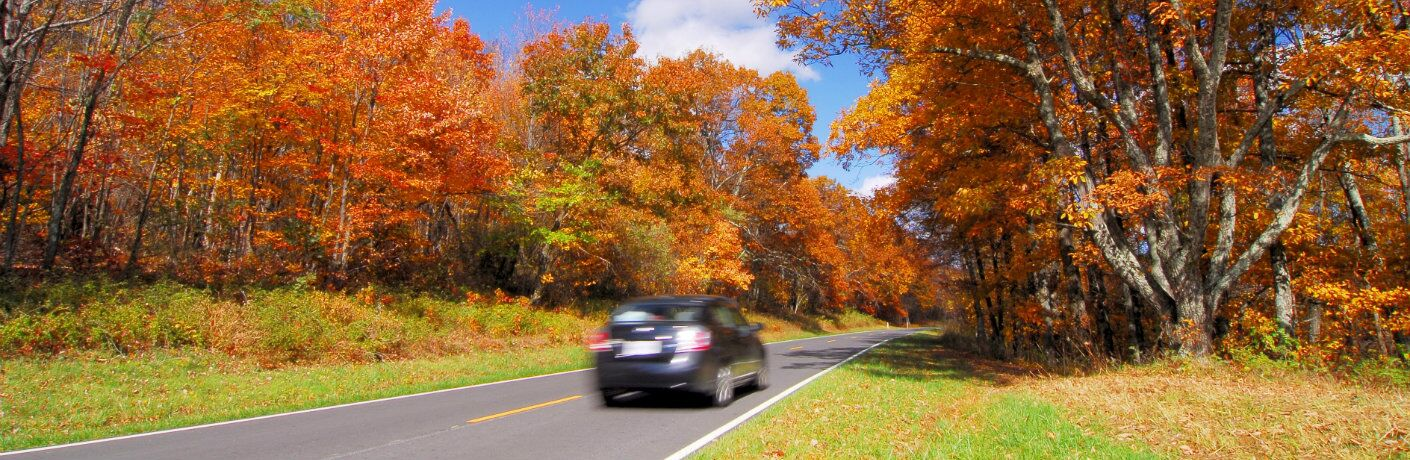 car driving along tree-lined highway during autumn