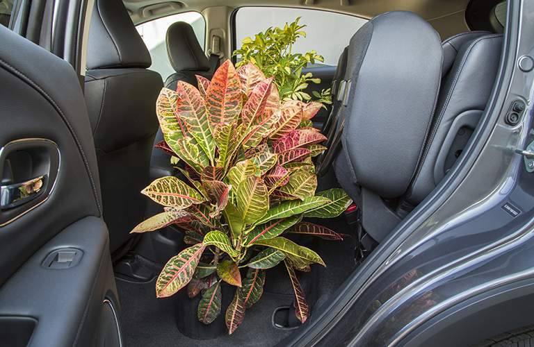 Rear seat of the 2018 Honda HR-V folded up to accommodate a large potted plant