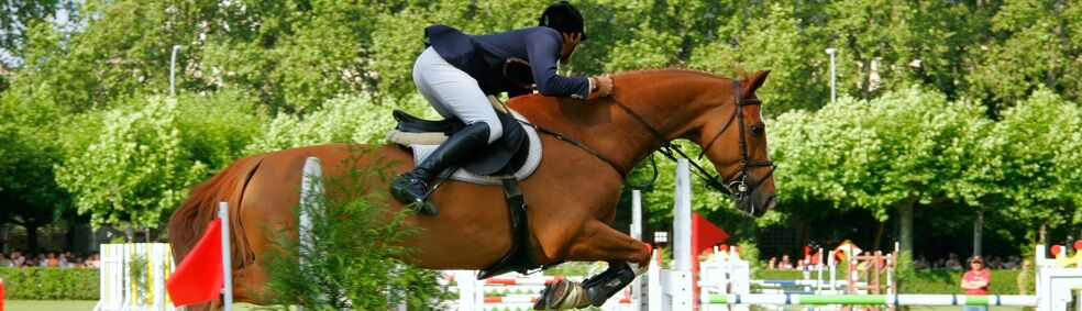 Best Equestrian Shows near Marion County