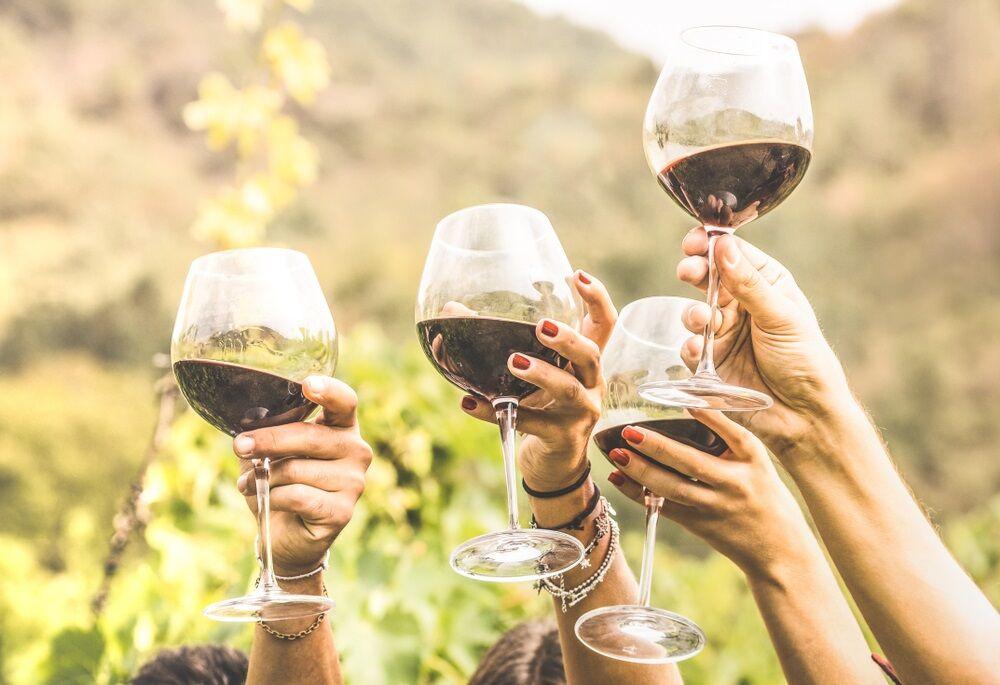 Vineyard tour at Winery near Ocala, FL