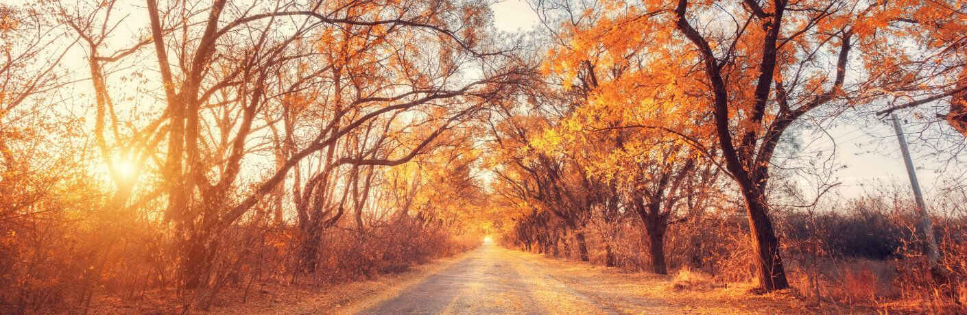 Unpaved road lined with trees during the fall season