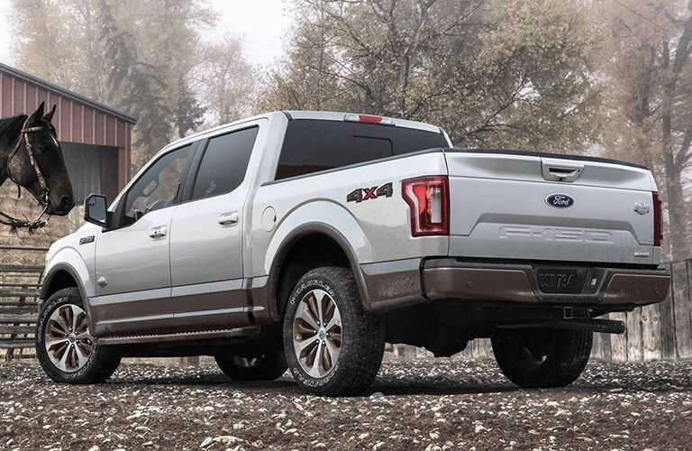 Rear view of white 2019 Ford F-150 with horse looking at it
