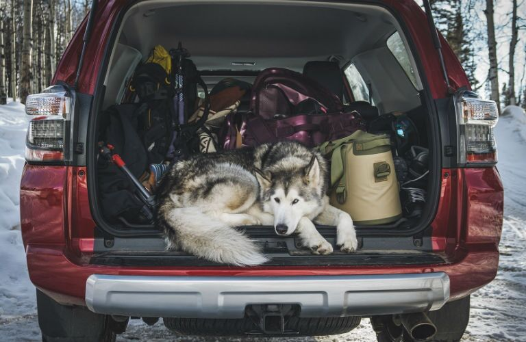 2019 Toyota 4Runner filled with cargo and a Husky