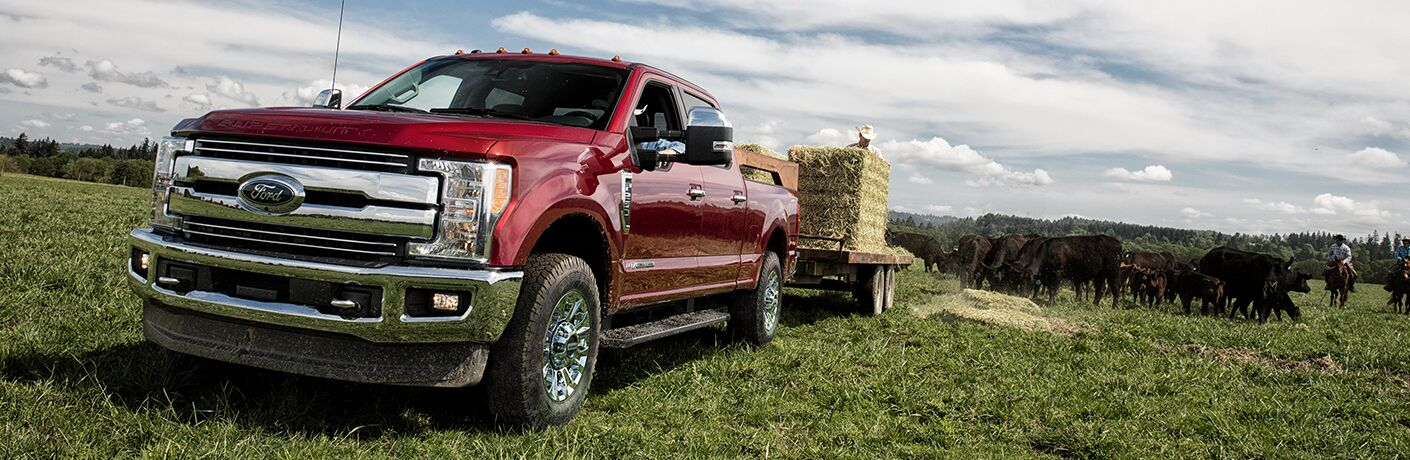 Red 2019 Ford F-250 Super Duty Towing a Trailer with Hay in a Farm Field with Cattle